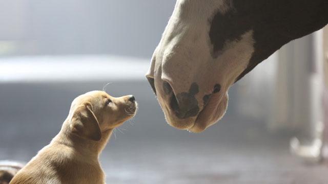 Bud-puppy-love