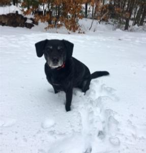 shift rescue dogs 1