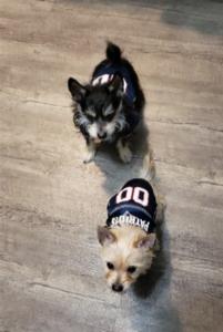 shift rescue dogs 2